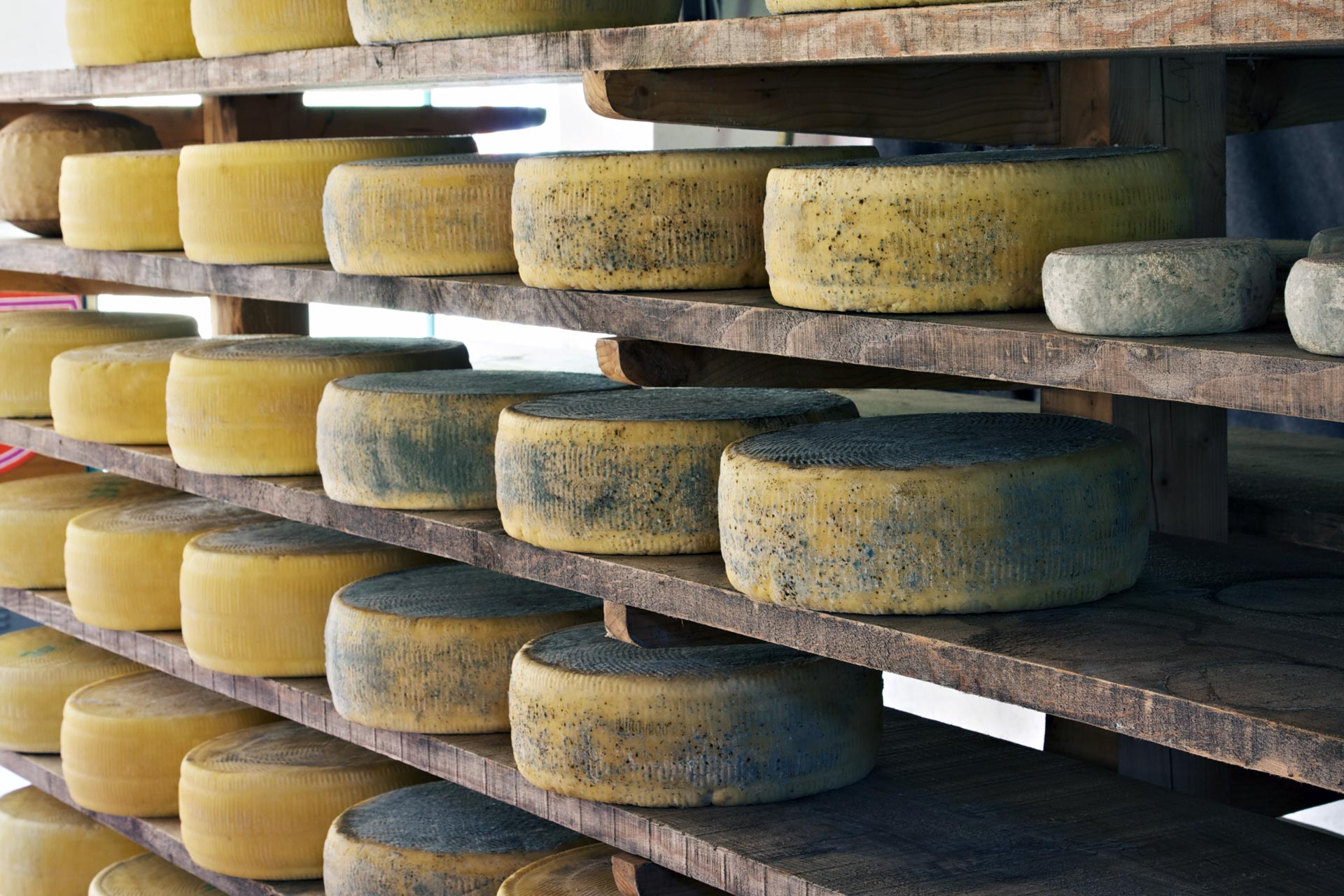 wheels of cheese aging on shelves