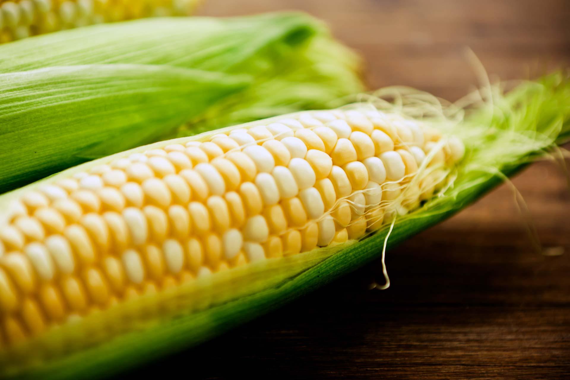 Fresh uncooked corn on the cob